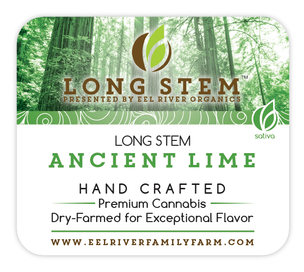 Long Stem Ancient Lime