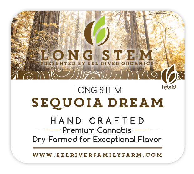 Long Stem SEQUOIA DREAM